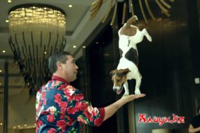 шоу с собачками алматы